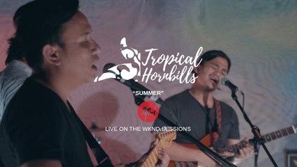 Tropical Hornbills - Summer - Live