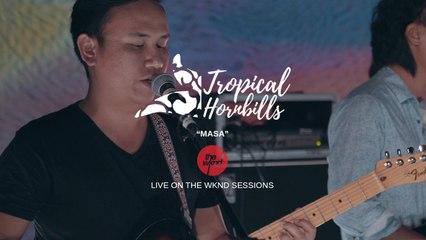 Tropical Hornbills - Masa - Live