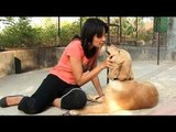 Seema re-visits the Pet sitters in Pune