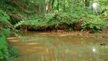 Quezac- Pre roll 6 - Et au milieu de la forêt coule une rivière -  teaser fillette forêt