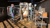 Une quinzaine de pédicures bovins exercent dans l'Orne