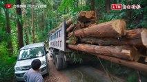 砍樹反而更環保? 你所不知道的森林真相
