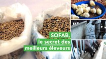 Burkina Faso : SOFAB, le secret des meilleurs éleveurs