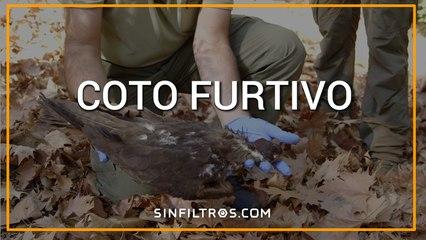 Coto Furtivo | Sinfiltros.com
