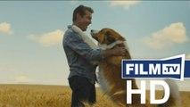 Bailey - Ein Hund Kehrt Zurück Trailer Deutsch German (2019)