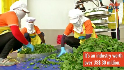 How Thailand Became The World's 4th Largest Tea Exporter