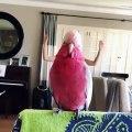 Vous aussi vous pourriez faire ça avec votre oiseau. Trop drôle !