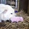 Ce que ce chien fait pour un bébé cochon orphelin va vous émouvoir !