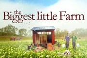 The Biggest Little Farm Movie Clip - Piglets And Chicken Confusion (2019) Documentary Movie HD