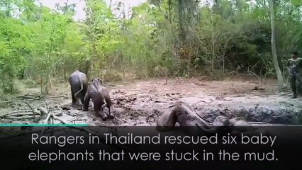 Baby elephants rescued from mud pit
