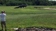 Un alligator géant est venu perturber une partie sur le golf de de Savannah Harbor