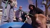Pit Bulls And Parolees S01E02