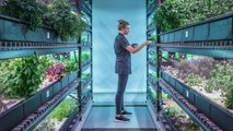 This underground New York City farm grows rare edible plants for high-end restaurants — What's in the Basement?