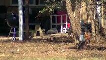 Texas _ 4 enfants, dont deux enfermés dans une cage, découverts dans une maison