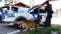 Treinamento de cães da Polícia Militar - parte 1
