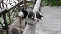 Cet oiseau a un langage bien à lui !