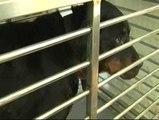 Los dos rottweiler agresores son trasladados a un centro para animales abandonados