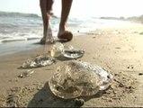 Las medusas invaden Salou
