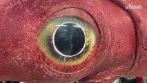 Les incroyables animaux marins de l'exposition Océan
