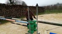 Meuse  Aston, le taureau qui se prend pour un cheval de saut dobstacles(1)