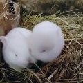 Des bébés lapins se font de gros câlins. Trop cute !
