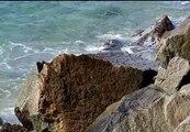 Una alga en las playas del Maresme complica las vacaciones a los turistas