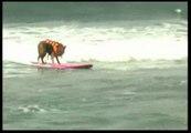 Más de 50 perros en una nueva edición de surfistas caninos