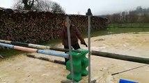 Meuse  Aston, le taureau qui se prend pour un cheval de saut dobstacles