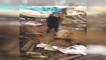 Van Çatak'ta Ahır Çöktü, 360 Küçükbaş Telef Oldu