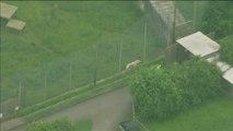 Muere una cuidadora del zoo de Hamerton, Reino Unido, tras ser atacada por un tigre