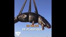 Filets de pêche, bidon de lessive… 22 kg de plastique ont été retrouvés dans ce cachalot échoué en Italie