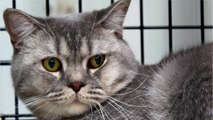 USDA Says It Will Stop Killing Cats For Research