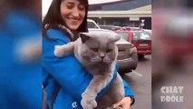 Try not to laugh   Cat Video To Die Laughing - Essayer De Ne Pas Rire   Vidéo De Chat À Mourir De Rire