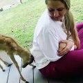 Quand une antilope est jalouse d'un bébé cochon, voici ce que ça donne. Trop marrant !