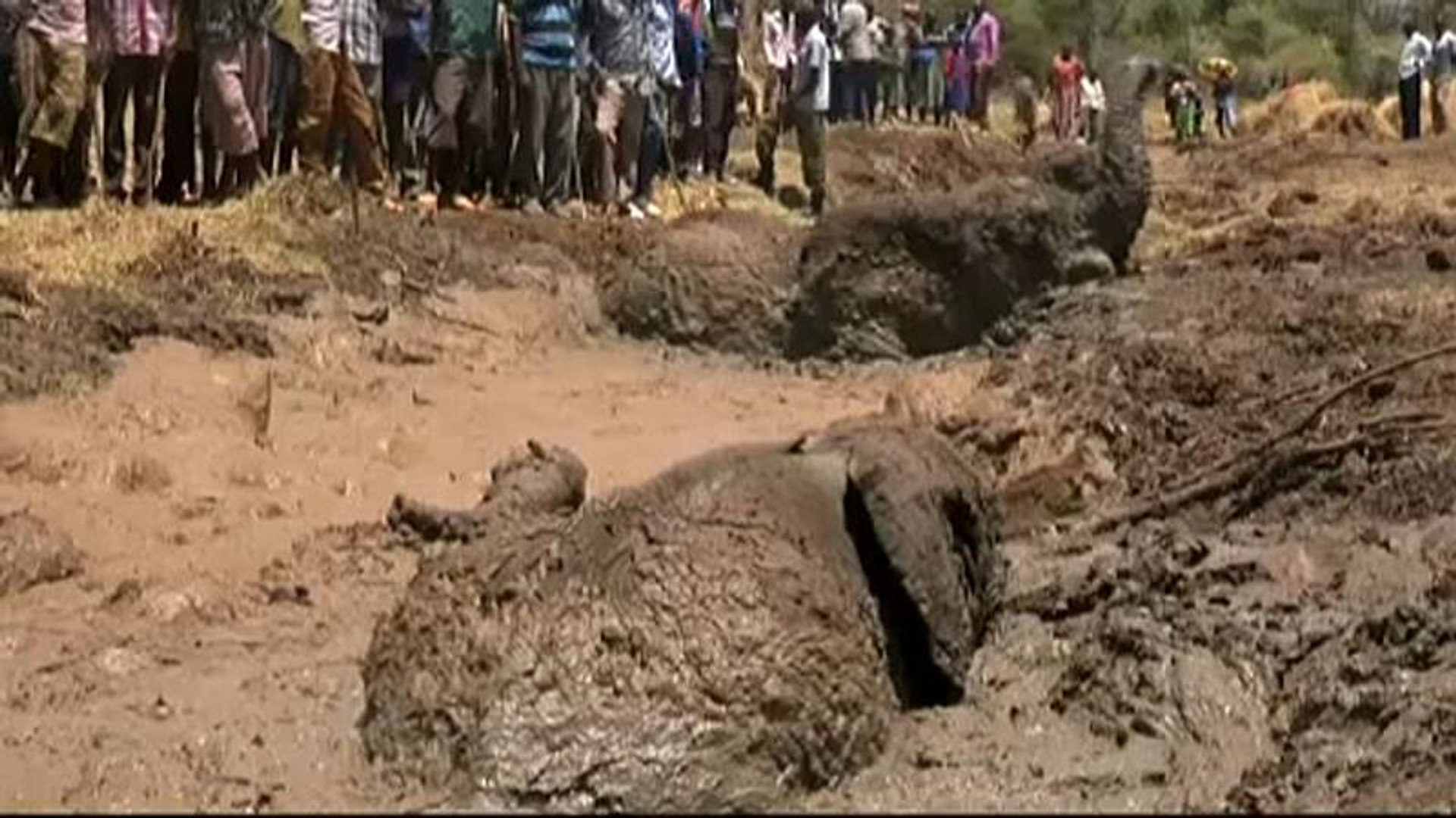 Kenyan rangers free three elephants trapped in muddy waters