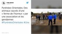 Pyrénées-Orientales. Des animaux sauvés d'une « ferme de l'horreur » par une association et les gendarmes