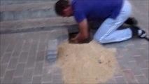 Ils sauvent un chien coincé sous les pavés du trottoir