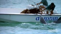 Un dauphin vient faire des bisous aux chiens dans un bateau
