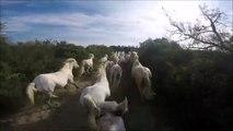 Un galop au milieu d'une vingtaine de chevaux en Camargue
