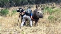 Un caméraman vient faire un calin à un rhinocéros dans la jungle !