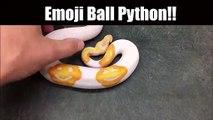 Ce serpent python albinos a des taches en forme de smileys... tellement adorable