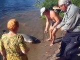 Ils sortent un énorme silure de la rivière... Gros poisson