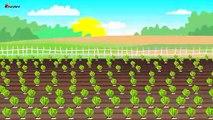Farmer Works on farm | Tractor. Sugar betteraves | Agriculteur Travail sur le Rôle - machines agricoles Conte de la Betterave