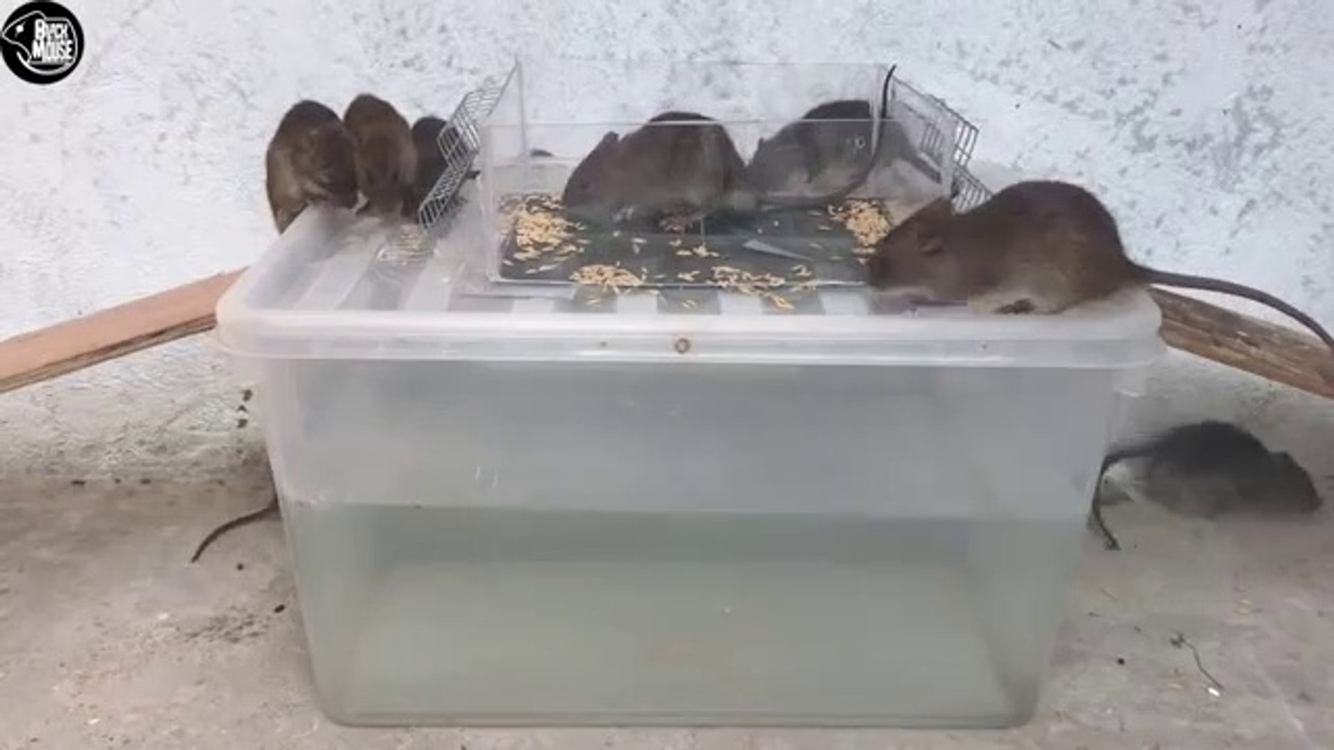 Rat Trap Water  7 Mice in trapped  Mouse_ Rat trap  Easy make a Best Rat Trap Handmade
