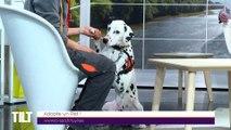 TILT - 08/04/2019 Partie 2 - Adopte un Pet !