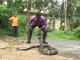 Il s'amuse avec son cobra royal... Dangereux
