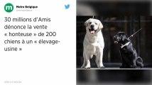 Dans la Marne, 30 Millions d'Amis dénonce la vente de 200 chiens à un « élevage-usine »