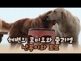 해변의 로미오와 줄리엣, 난봉이와 토르 [윤형빈의 팔도견문록 시즌2] 1회