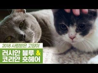 황실 정통 러시안 블루 & 코리안 숏헤어 [펫과사전] 11회