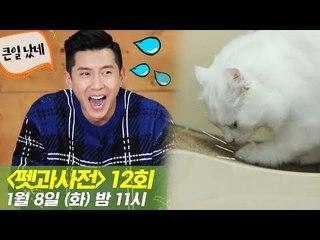 [12회 예고] 펫과사전 with 브라이언 & 고양이 스크래처, 1월 8일 (화) 밤 11시